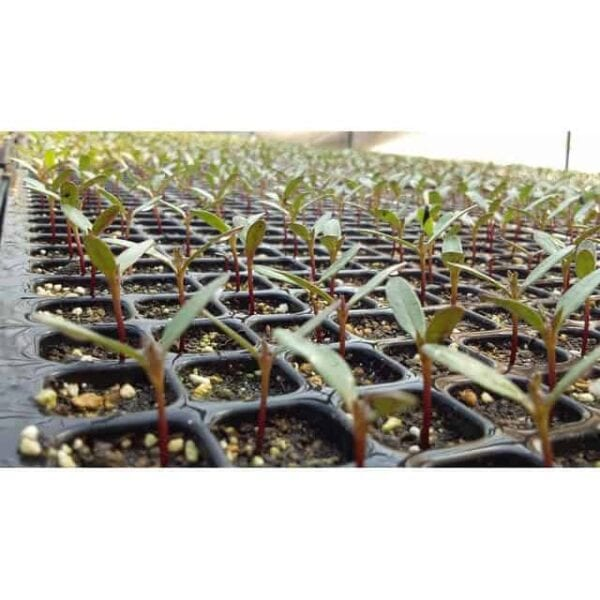seedlings 3616271 640